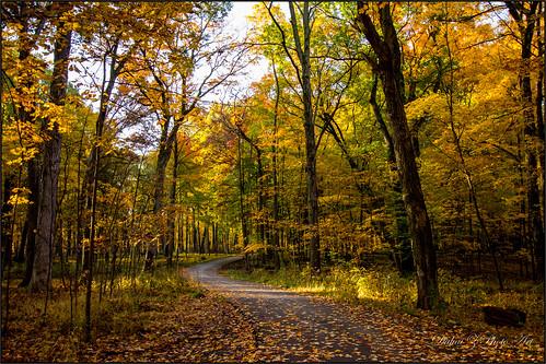 fallcolors autumncolors ryersonwoods canoneos60d autumn2014