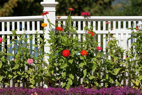 flowers fences bayview petoskey stafford robertcarterphotographycom ©robertcarter