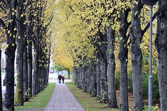 Autumn in Lund 2014