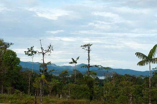 Ecuador, Esmeraldas, Reserva Otokiki, 2014