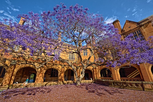 Lilac Flowers of Doom!