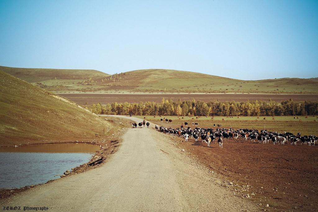 內蒙古‧印象2042-19-2.jpg