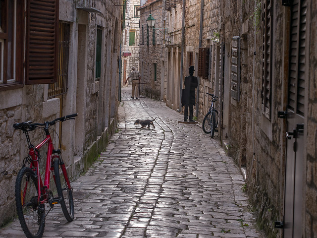 Alley with dog