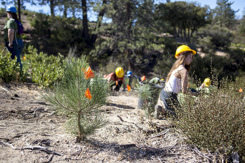 Angeles Forest Tree Care