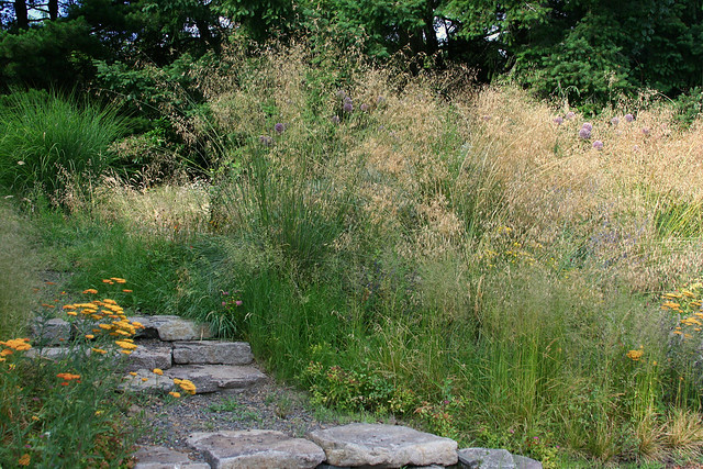 22_stipa_gigantea_mass