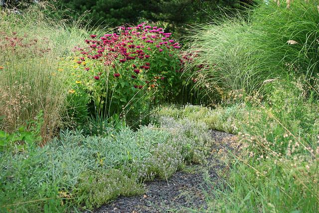 25_monarda_and_grasses