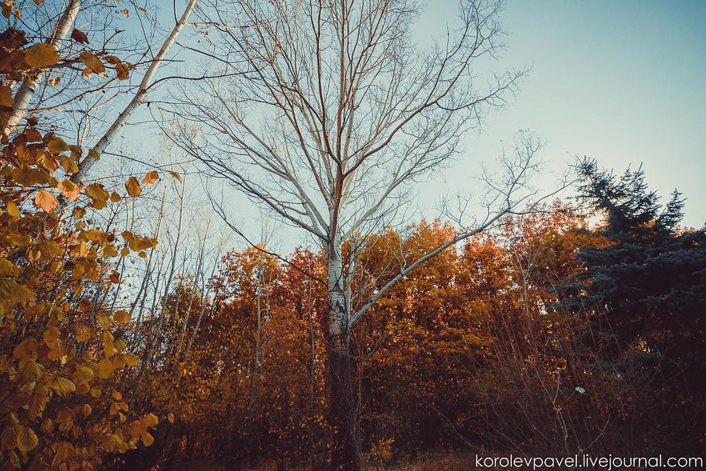 Autumn-074