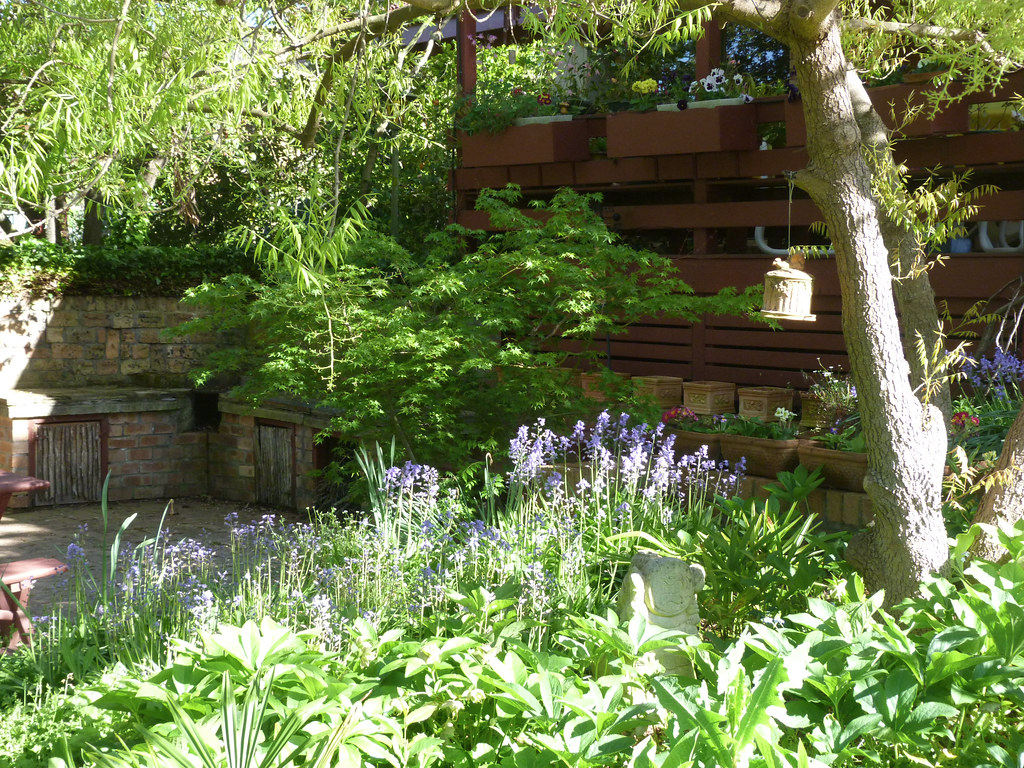 Back courtyard and bluebells