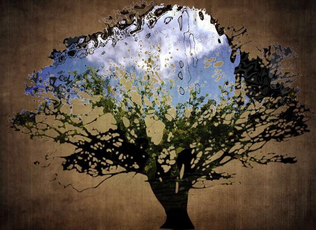 Tree Presence - 2