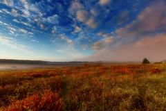 Misty Morn on  Big Meadows