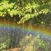 sprinkler rainbow : sacramento, california (2014)