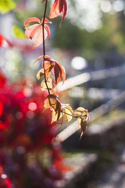 [207] Autumn Bokeh