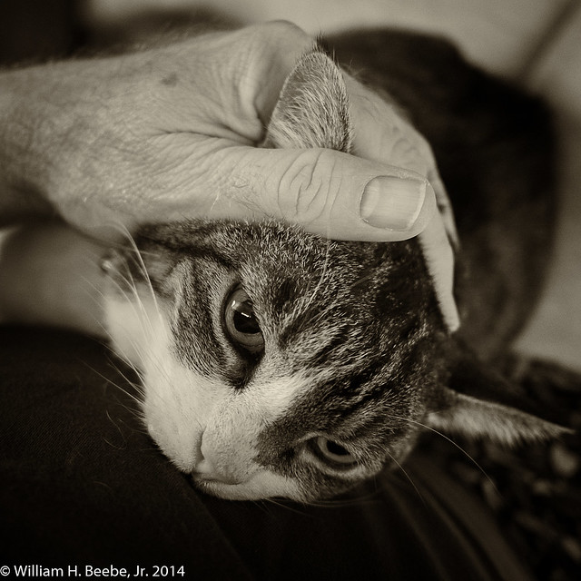 looking for solace