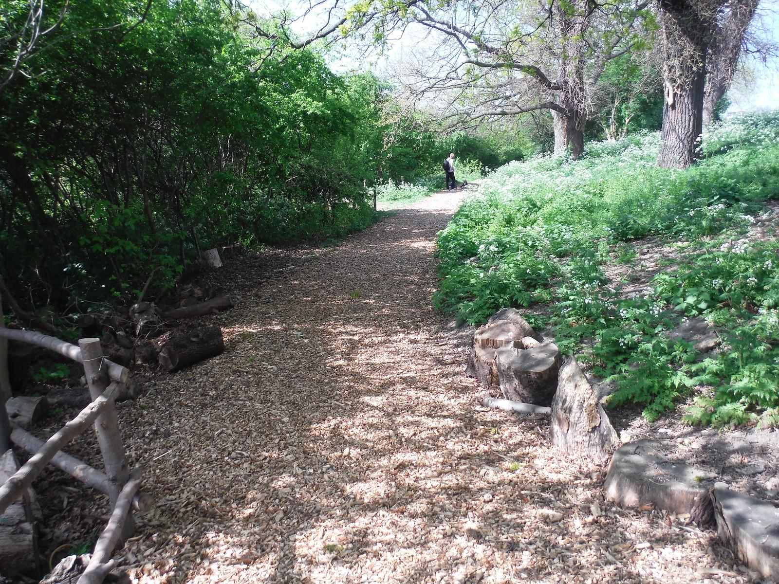 Woodland Trail (I), Woodberry Wetlands SWC Short Walk 26 - Woodberry Wetlands (Stoke Newington Reservoirs)