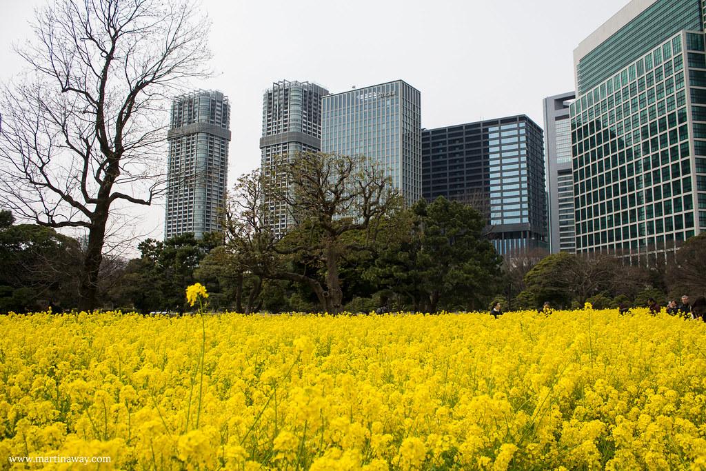 Hama rikyū Gardens