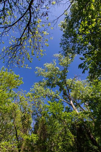 canon7d canoneos7d landscape lewisville texas trees park green nature