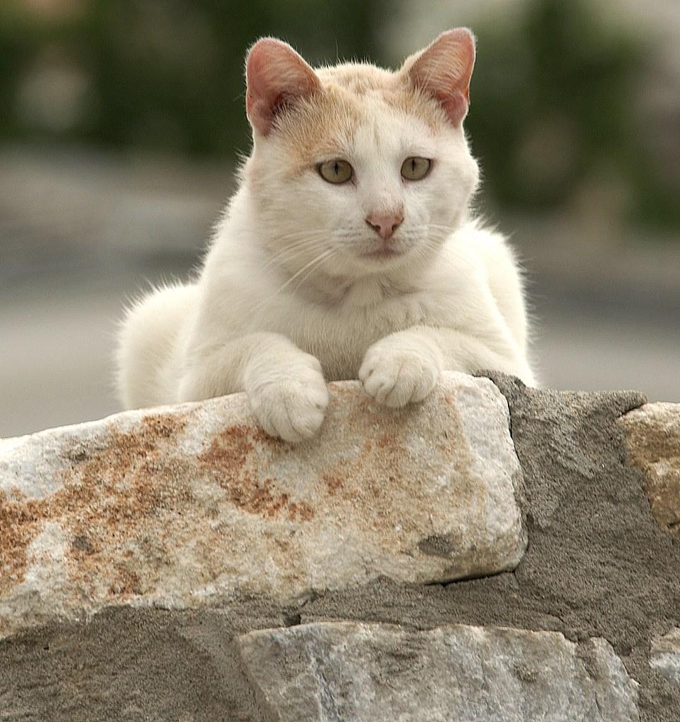 Thassos Cat