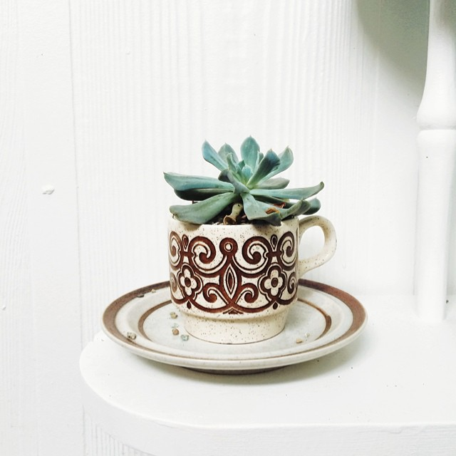 Spotted today at brunch - love this idea for succulents and old mugs.  #vintage #recycling #urbangardening