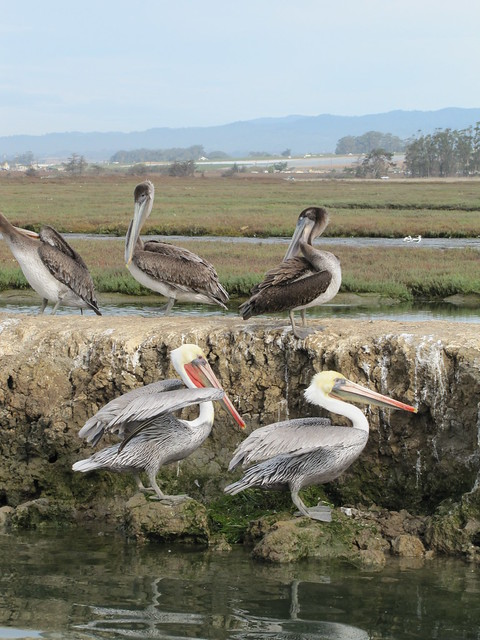 Elkhorn Slough Safari Tour in Moss Landing