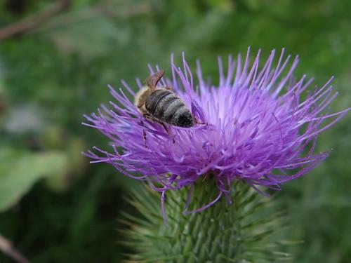 Rund um die Bienen und Blumen, die Blümchen will ich rufen, doch Blumen sind stumm zusammengestellt, es öffnet ganz weit die Blüte 0173