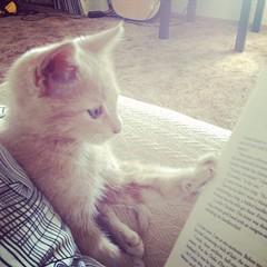 From street kitten to literary feline