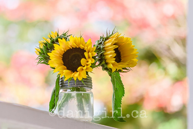 Photograph of sunflowers in a vintage mason jar