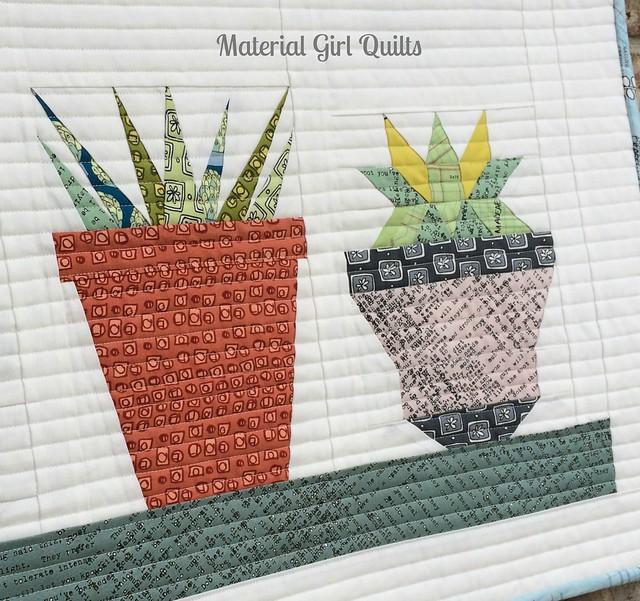 Succulents detail