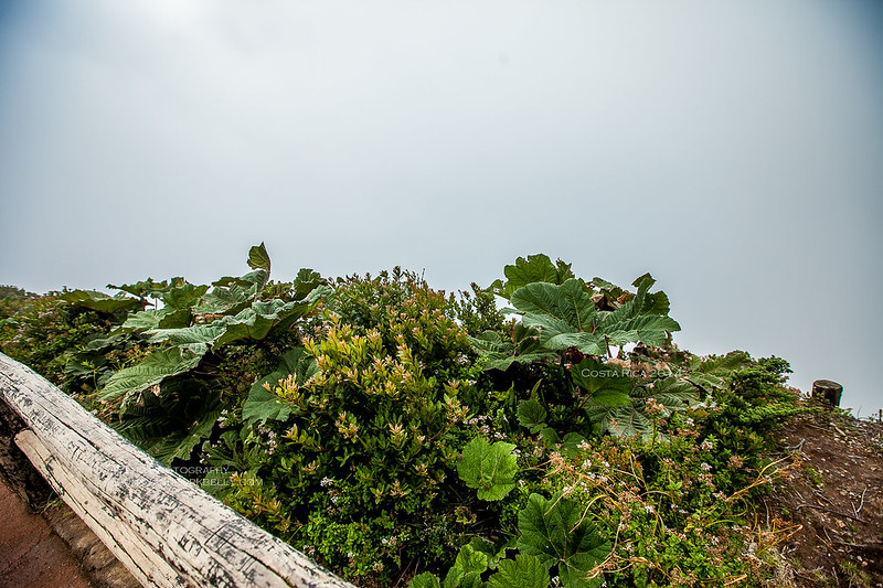 August 15, 2014-IMG_9968