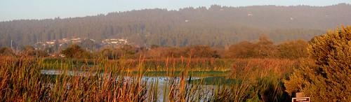 autumn humboldt fallcolors marsh arcata humboldtcounty arcatamarsh