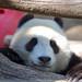 Happy Wu-dnesday by Rita Petita