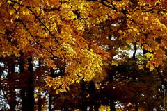 Canadá, Ontário: As cores do outono