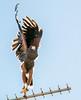 Eagle 24102014-04