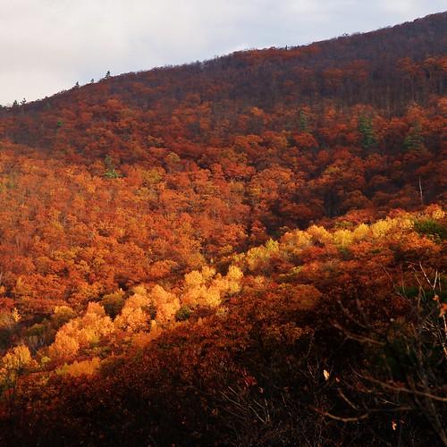 new autumn trees red england mist mountain mountains fall sunrise gold haze october mt oct nh hampshire mount roberts hazy range 2014 ossipee