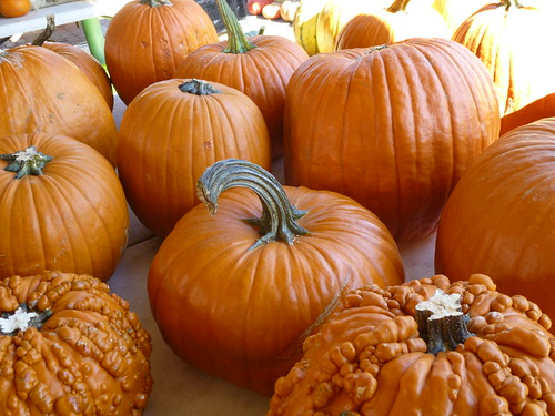 Pumpkin Products Plague 2014