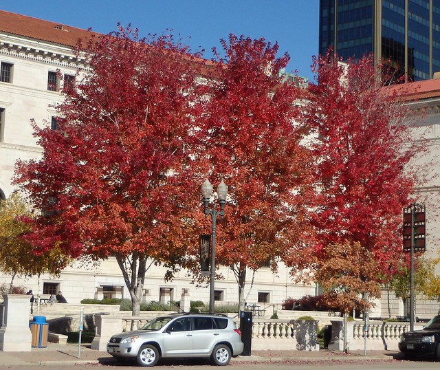 bright red maples outside George Latimer Central Library