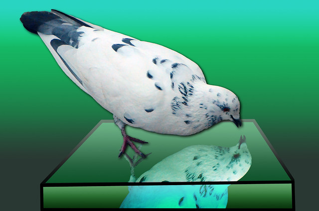 On the otherside of the Mirror, White Pigeon, October 28, 2014 1-4 full bpz