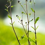 Növény és háttér 1