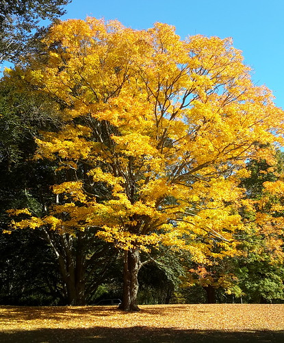 Fall is peaking in the Boston Area 10/06/14