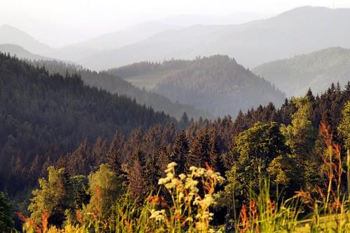 black forest germany landscape landschaft wald schwarzwald