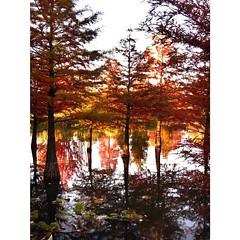 Autumn Days - Part III 🍂🌾🍃🍁 #autumn #autumnsky #autumndays #fallhasarrived #fall #beautyfulldays #colorful #red #orange #leaves #loveit