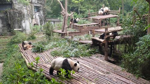 Chengdu-Teil-2-022