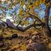 Cottonwood Splash by Robert H Carney