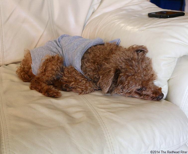 sleeping Bella in her Flash Dance shirt
