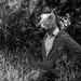 Horse, man, or horseman? by kenfagerdotcom