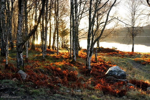 morning lake tree nature sunrise scotland highland d90 nikon90