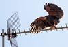 Eagle 24102014-03