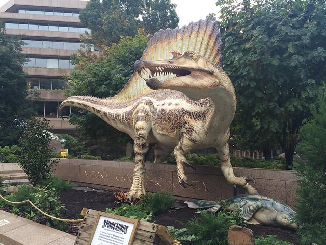 Spinosaurus, National Geographic Museum