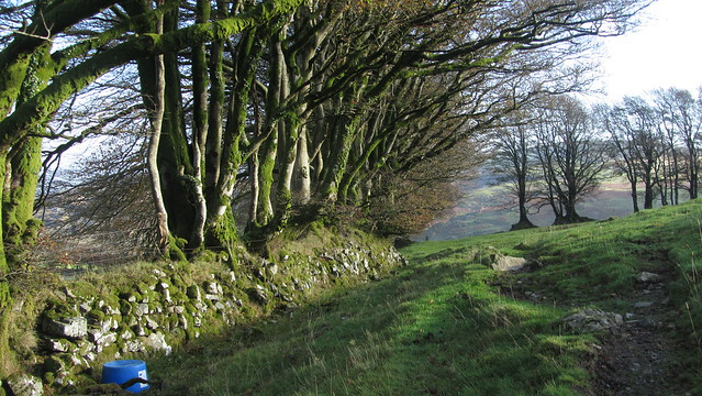 Higher Bowden wall on South Down