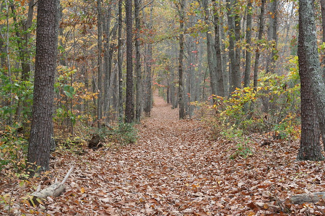James River State Park Fall 2014 (269)