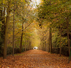 Path with trees 2